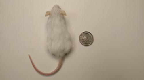 Myš XL
