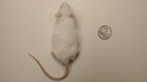 Myš XXL