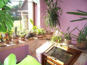 zahrada4