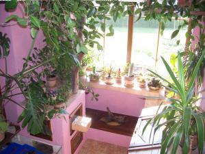 zahrada6