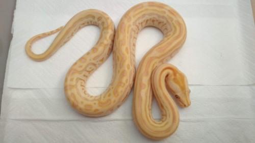 Pearl Labyrinth